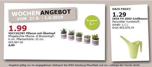 IKEA Hamburg-Moorfleet  - SUCCULENT Pflanze mit Übertopf - jetzt 33% billiger